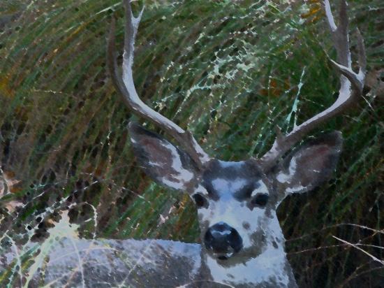 deer image for amenandehmen