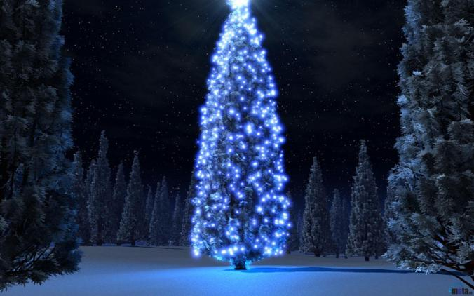 christmas-tree-in-the-forest
