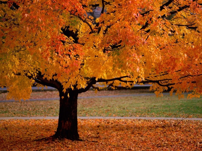 trees-in-autumn-scenery-pics-22174534-1600-1200